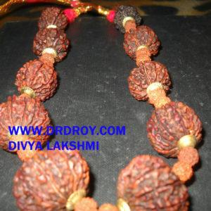 RUDRAKSHA SIDDHA MALA 1 TO 14 MUKHI RUDRAKSH NEPAL ORIGINAL